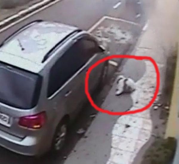 acidente de carro pdd1 - Shih Tzu sobrevive após ser arremessado pela janela durante acidente de carro