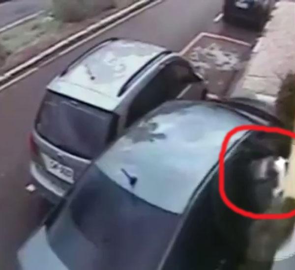 acidente de carro pdd2 - Shih Tzu sobrevive após ser arremessado pela janela durante acidente de carro