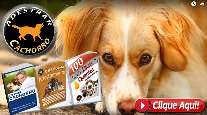 adestrar cachorro curso - Como Fazer seu Shih Tzu Parar de Pedir Comida Quando Você Estiver Comendo