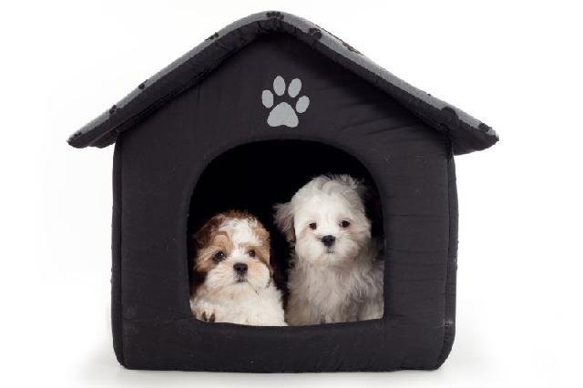 casa de cachorro - Saiba como escolher a casinha para seu cãozinho