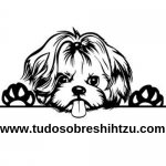 Página Inicial | Tudo Sobre Shih Tzu
