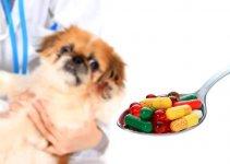 Como dar remédios para o Shih Tzu