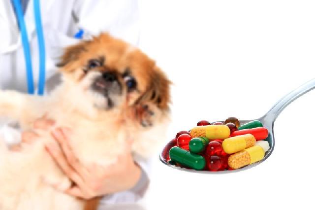mpc5 - Dicas e truques para dar remédios para o Shih Tzu