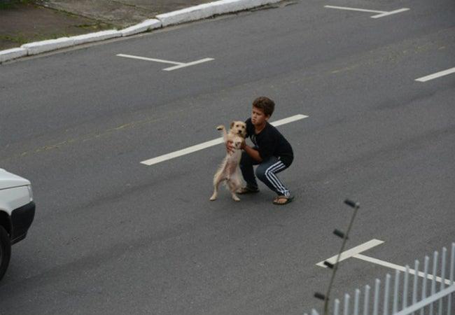 criança salva cachorro atropelado - Criança para o trânsito para socorrer cachorro atropelado